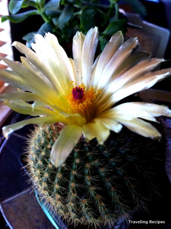 1-saturday cactus